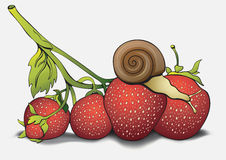 Snail on strawberries, cartoon pictures, hand-drawing. Can be used as a card, cover, print, design shirts, fabric Royalty Free Stock Photo