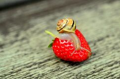 Snail on strawberry Royalty Free Stock Photography
