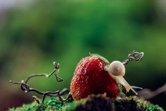 Snail on the Strawberry stock images