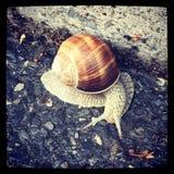 A snail Stock Photos