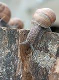 Snail on stump Stock Photos