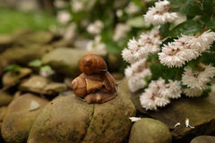 Snail on the stump Royalty Free Stock Image