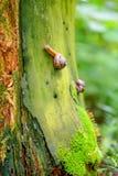 Snail on a stump Royalty Free Stock Image