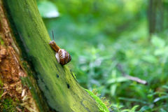Snail on a stump Royalty Free Stock Photography