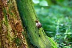 Snail on a stump Stock Photo