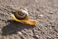 Snail in sunlight. Small snail on road against sunlight royalty free stock photo