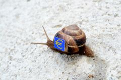 Snail with with symbols of money on a shell Stock Photos