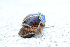 Snail with with symbols of money on a shell Royalty Free Stock Images