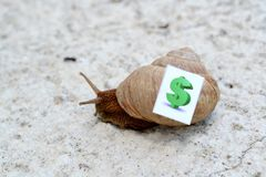 Snail with with symbols of money on a shell Royalty Free Stock Photos