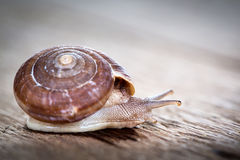 Snail on the table Stock Photo