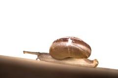 Snail on the table Stock Photos