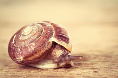 Snail on the table Royalty Free Stock Images