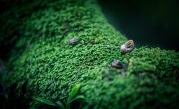 Snail take a walk on the moss. Snail take a walk on the green moss, very happy. 蜗牛在苔藓上愉快的散步 绿色的环境让人舒服  Green environment Royalty Free Stock Image