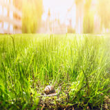 Snail in tall grass on background of the city Stock Photography
