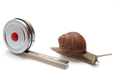 Snail and tape measure. Against white background stock photo