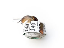 Snail on Tape Measure 2 Royalty Free Stock Image