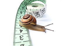 Snail on Tape Measure Royalty Free Stock Photos
