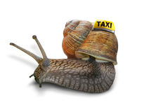 Snail taxi Stock Images