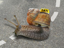 Snail taxi Royalty Free Stock Photography