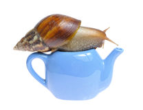 Snail on teapot. Isolated on white background Royalty Free Stock Photo