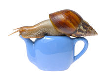 Snail on teapot. Isolated on white background Stock Photography