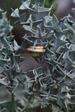 Snail on the thorn bush plants Stock Photo