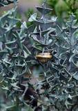 Snail on the thorn bush plants Stock Photography
