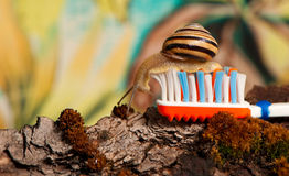 Snail at toothbrush Royalty Free Stock Images