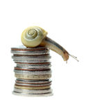 Snail on top of coins Royalty Free Stock Photography