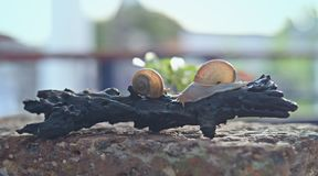 Snail in the top of the wood. 