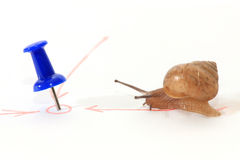 Snail towards the goal. Royalty Free Stock Photos