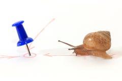 Snail towards the goal. Snail towards the goal very hardly Royalty Free Stock Photos