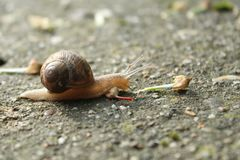 Snail tracing concrete Royalty Free Stock Images
