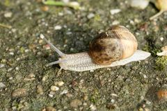 Snail tracing concrete Stock Photography