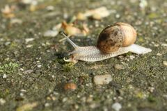 Snail tracing concrete Stock Image