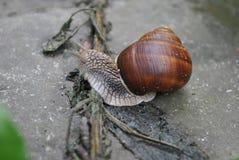 Snail on track Stock Photo