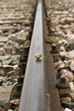 Snail on track train Royalty Free Stock Photography