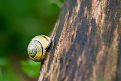 Snail at the tree Stock Photo