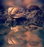 Snail on a tree bark Stock Image