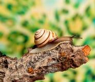 Snail on a tree bark Royalty Free Stock Photo
