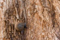 Snail on a tree bark. Stock Photos