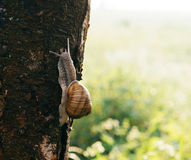 Snail on a tree in a beautiful sunny day royalty free stock photography