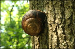 Snail on a tree. Snail on a tree in the forest Stock Photo