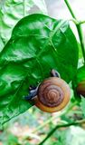 Snail on tree  Royalty Free Stock Photos
