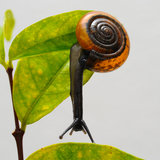 The snail on tree stem. Isolate on white royalty free stock image