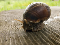 Snail on a tree stump Stock Images
