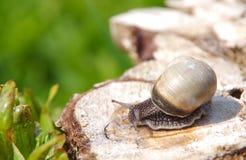 Snail on a tree stump Royalty Free Stock Photography