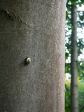 Snail on the tree trunk Royalty Free Stock Photography
