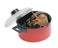 Snail tries to escape from saucepan. Isolated on white background Stock Photos