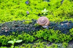 Snail. In tropical rain forest Stock Photos